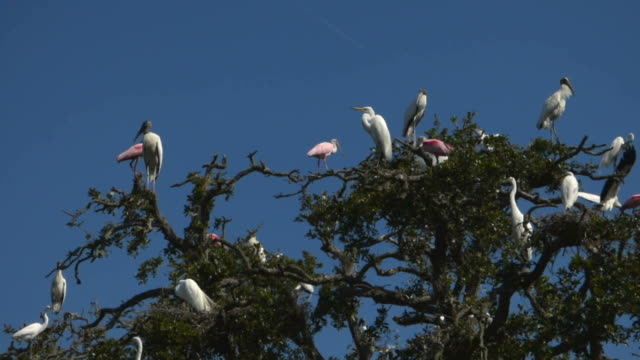 rookery full of birds - egret stock videos & royalty-free footage
