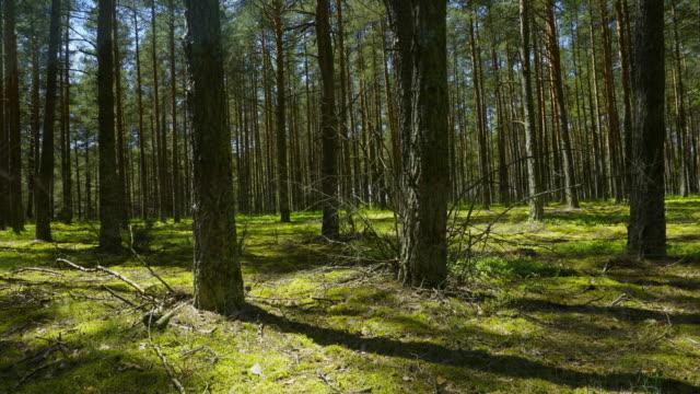 vídeos de stock, filmes e b-roll de raízes de árvores e - ramo parte de uma planta