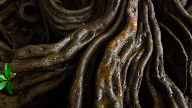vídeos y material grabado en eventos de stock de roots in the river - raíz