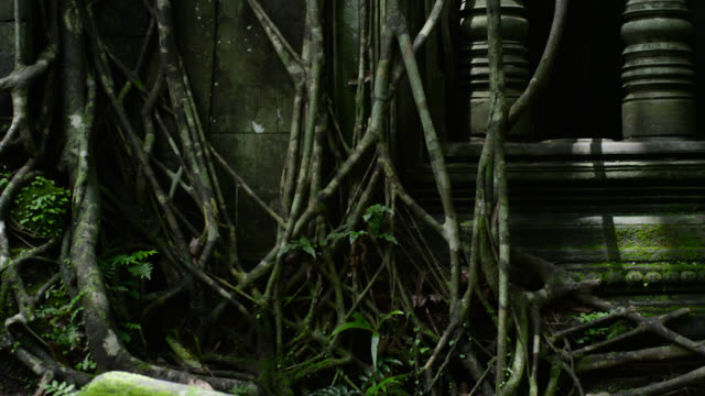 roots of strangler fig at ta prohm, cambodia. - ruined stock videos & royalty-free footage