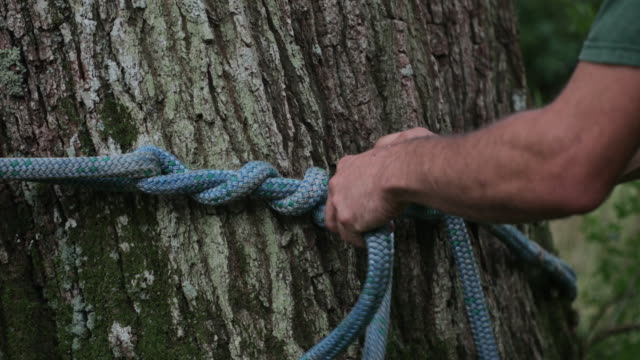 a rope for tree climbing - rope stock videos & royalty-free footage