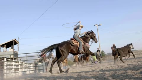 roping cowgirl - rodeo stock videos & royalty-free footage