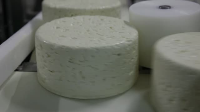 Roquefort Societe 150years cheese moves along production line at the Roquefort Societe 150years dairy part of Groupe Lactalis in SaintAffrique An...