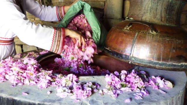 stockvideo's en b-roll-footage met rosa damascena. etherische olieproductie seizoen is nu. de overvloed van de beroemde bulgaarse roos is in zijn hoogtepunt. - cosmetica