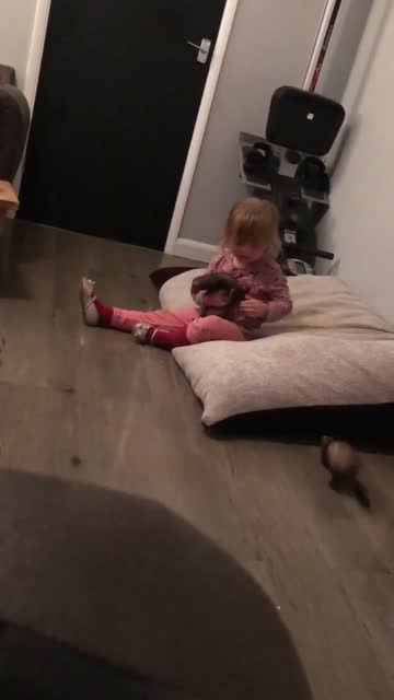 rose, a three-year-old girl in somerby, england, has a great rapport with the family's pet ferrets, as shown in a video where she scoops up several... - animal hair stock videos & royalty-free footage