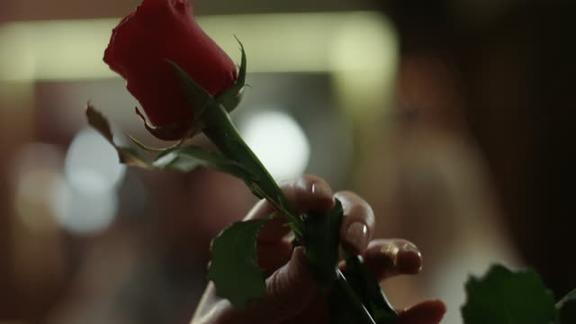 rose for woman - giving stock videos and b-roll footage