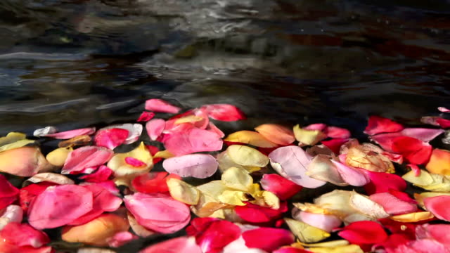 Rose leaves in a fountain.