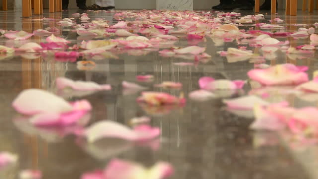 hd: rose leaves - back to front stock videos & royalty-free footage