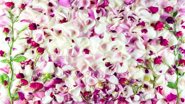 rose petal-stop-motion-animation - blumenbouqet stock-videos und b-roll-filmmaterial