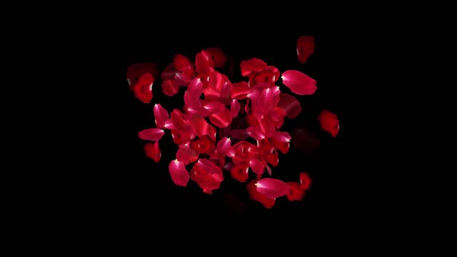vidéos et rushes de fond de pétales de rose, loopable, série - pétale