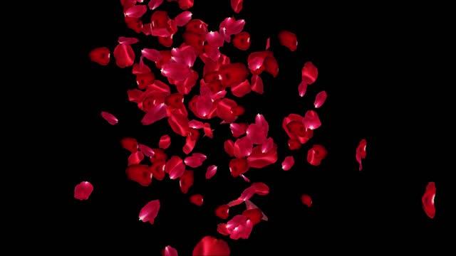 ローズ花びらの背景,ループ可能, シリーズ - 花びら点の映像素材/bロール