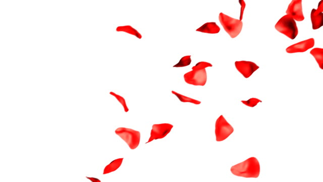 rose petals falling hd - petal stock videos & royalty-free footage