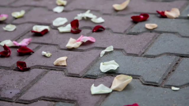 Rose Petals On Footpath