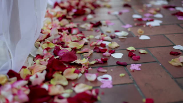 rose petals on the floor - rose petal stock videos and b-roll footage