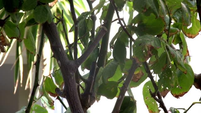 rose prune. - secateurs stock videos & royalty-free footage