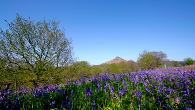 Roseberry Topping & Bluebells