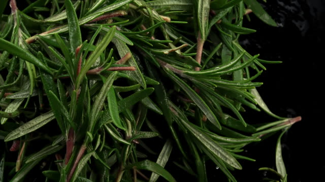 rosemary leaves in the air - ingredient stock videos & royalty-free footage