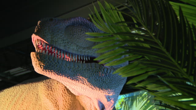 wgn rosemont il us realistic and lifesized dinosaur at traveling dinosaur adventure exhibition in rosemont on sunday january 12 2020 - animal head stock videos & royalty-free footage