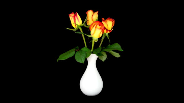 roses in a vase - bunch of flowers stock videos and b-roll footage