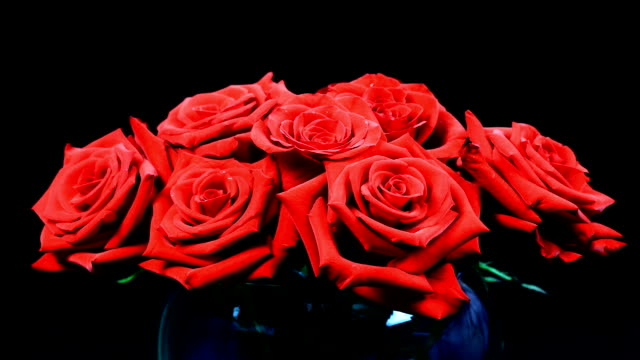 roses - bouquet stock videos & royalty-free footage
