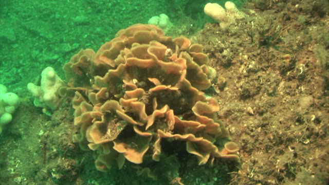 ross coral.  pembrokeshire, wales, uk - pembrokeshire stock videos & royalty-free footage