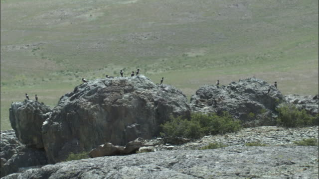 Rosy starlings perch on rocky outcrop, Qinghe County
