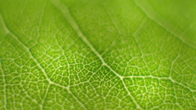 rotate macro shot close focus on a green leaf - foglia video stock e b–roll