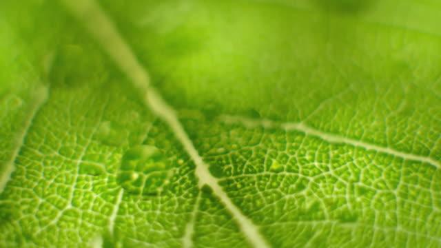 rotate macro shot close focus on a green leaf - fotosintesi video stock e b–roll