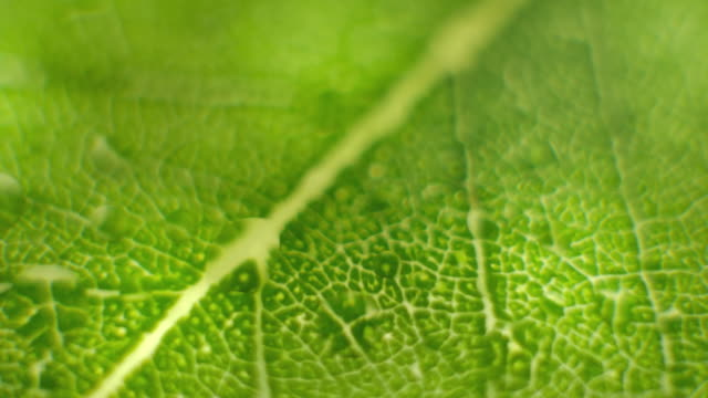 rotate macro shot close focus on a green leaf - botany stock videos & royalty-free footage
