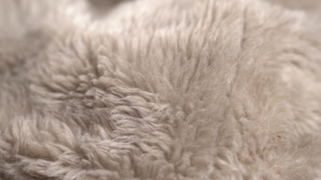 rotate:gray animal fur background - softness stock videos & royalty-free footage