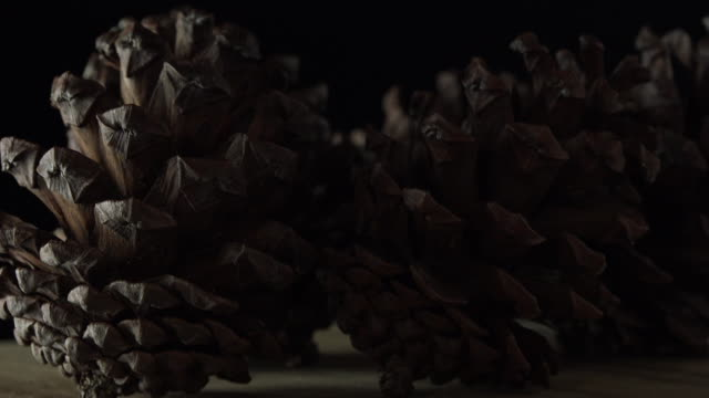 rotate:pine cones - pinecone stock videos & royalty-free footage