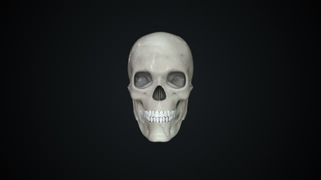 rotating 3d human skull animation with alpha matte. loopable - skull stock videos & royalty-free footage