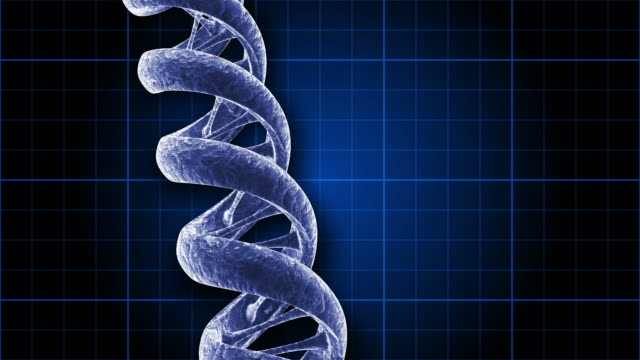 a rotating dna strand on a blue grid - helix model stock videos and b-roll footage