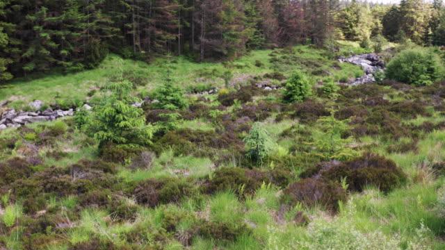 vidéos et rushes de vue tournante de drone d'une zone de forêt à côté d'un petit ruisseau dans le sud-ouest de l'ecosse - remote location
