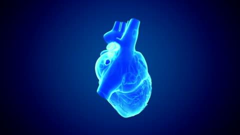 rotating heart - human internal organ stock videos & royalty-free footage