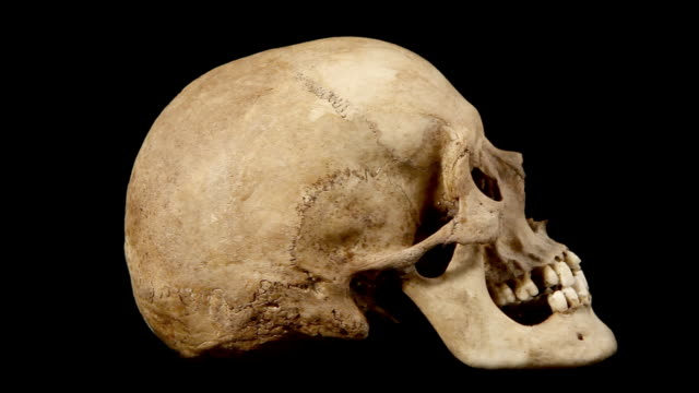 rotating human skull - anatomy stock videos & royalty-free footage