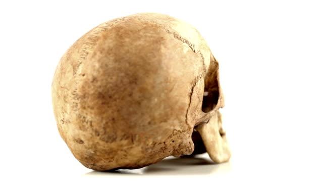 Rotating Human Skull