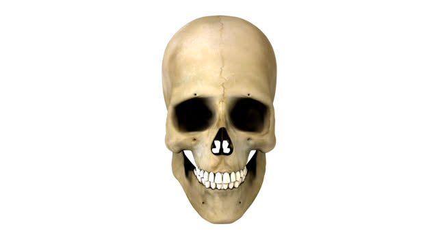 rotating human skull - skull stock videos and b-roll footage