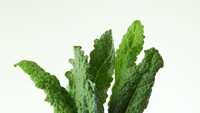 rotating kale - kale stock videos and b-roll footage
