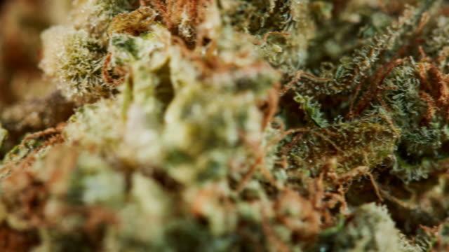 rotating macro cannabis buds - marijuana cannabis video stock e b–roll