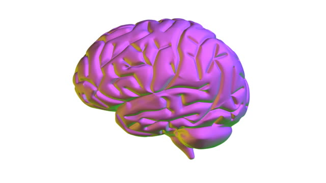 rotating model of a healthy human brain - genius stock videos & royalty-free footage