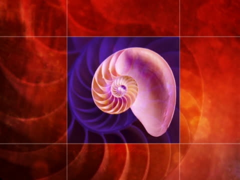 rotating nautilus seashell - nautilus stock videos & royalty-free footage