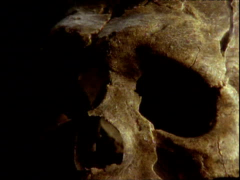 rotating neanderthal skull against black background - primate stock videos & royalty-free footage
