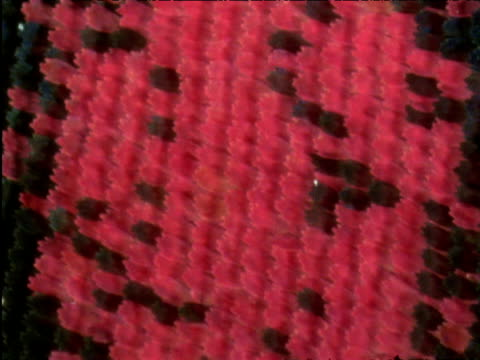 rotating red butterfly wing scales - tierhaut stock-videos und b-roll-filmmaterial