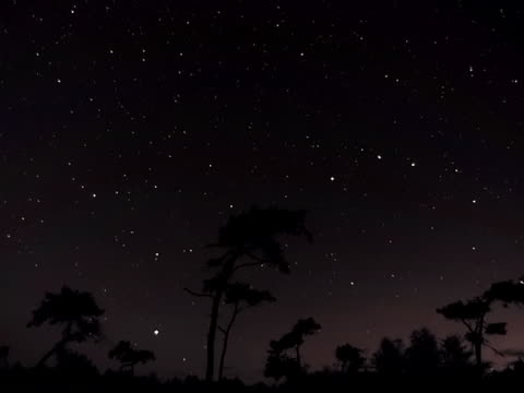 Rotating stars and zooming clouds over silhouetted trees timelapse