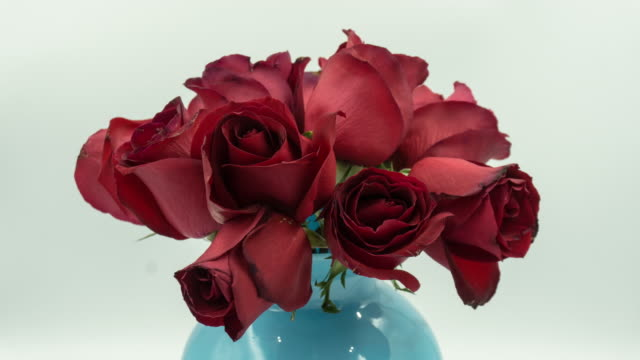 4k rotating time-lapse of dying red rose. - decay stock videos & royalty-free footage