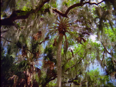 rotating view of trees - epiphyte stock videos & royalty-free footage