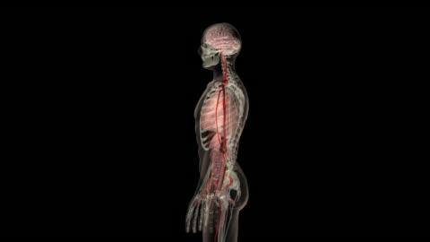 rotation around the human body - anatomy stock videos & royalty-free footage