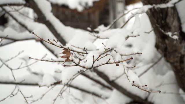 回転の間の木の枝が雪で覆われて