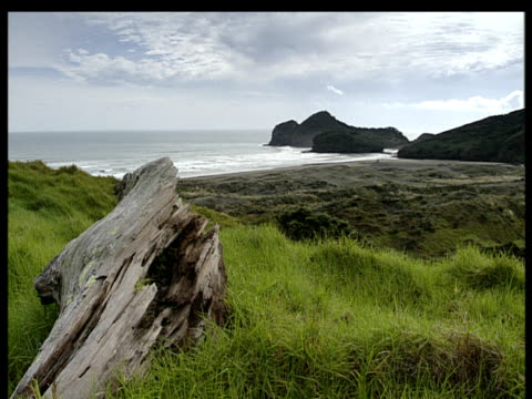 rotten log and rough grass in foreground grey sea under dull sky deserted beach rocky islands by shore. - ceppaia video stock e b–roll